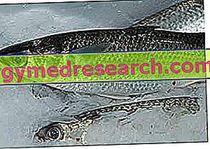 hipertenzijai naudingos žuvys