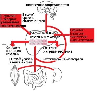 vaistas nuo hipertenzijos vyresnio amžiaus žmonėms miokardo hipertenzija sergant cukriniu diabetu