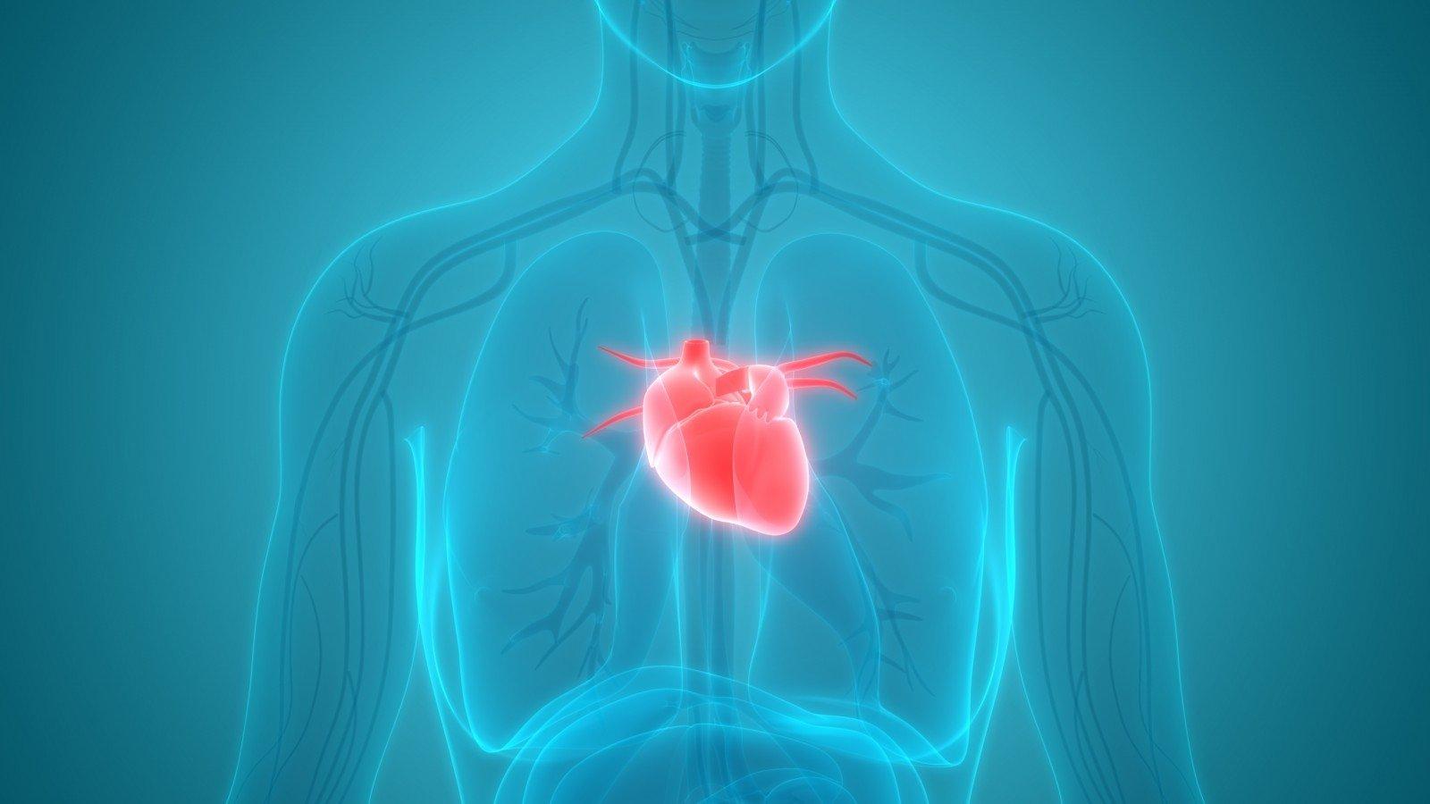 kokia yra padidėjusios širdies rizika sveikatai