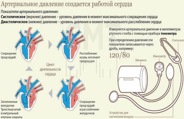 hipertenzija 3 laipsnio ovr