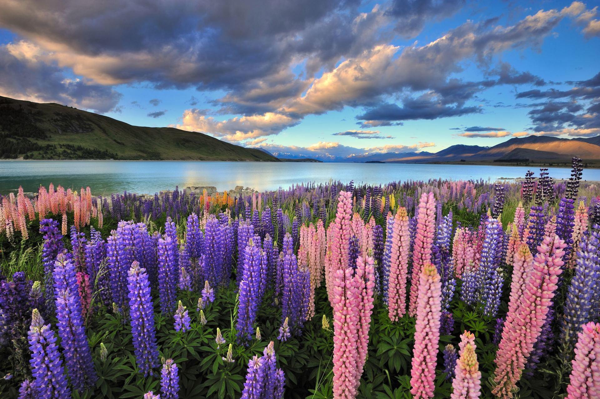 tavo širdies sveikata Naujoji Zelandija sveikatos skatinimas sergant širdies ligomis