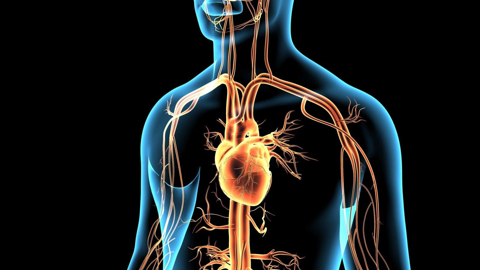 frotinė hipertenzija hipertenzija, kas nutiks, jei nebus gydoma