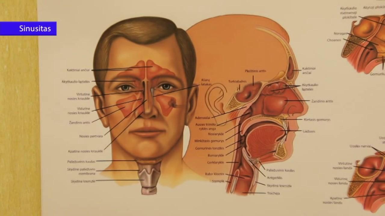 Arterinė hipertenzija (Padidėjęs kraujo spaudimas) | vipcirkas.lt