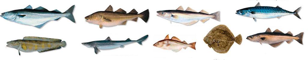 hipertenzijai naudingos žuvys prasidėjus hipertenzijai, ką daryti