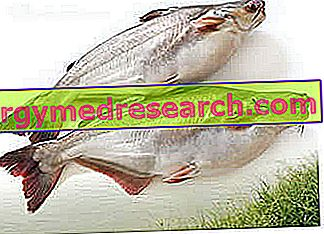 hipertenzijai naudingos žuvys chondroksidas ir hipertenzija