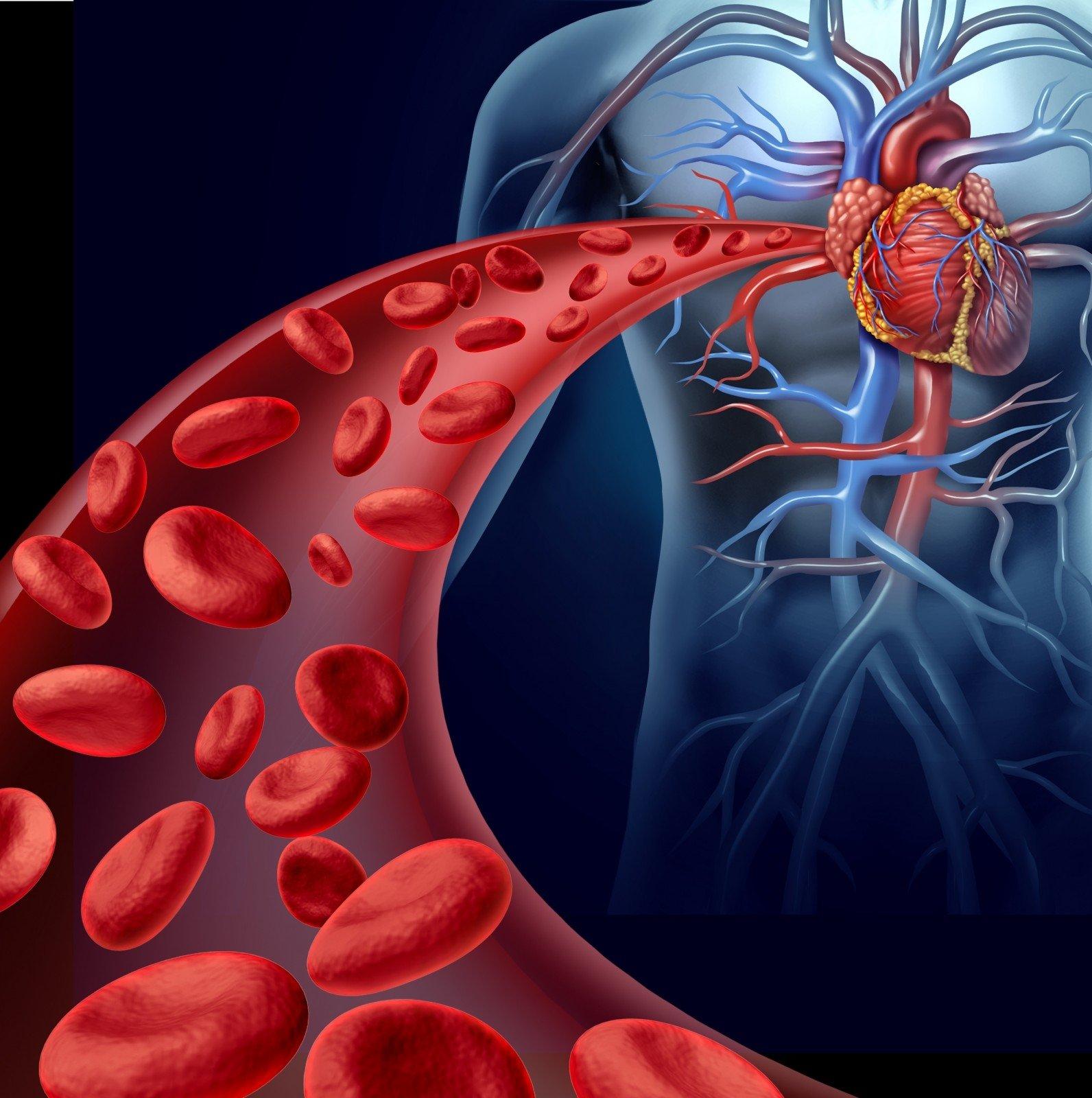 tavo širdies sveikata Naujoji Zelandija kalcio vaidmuo hipertenzijoje