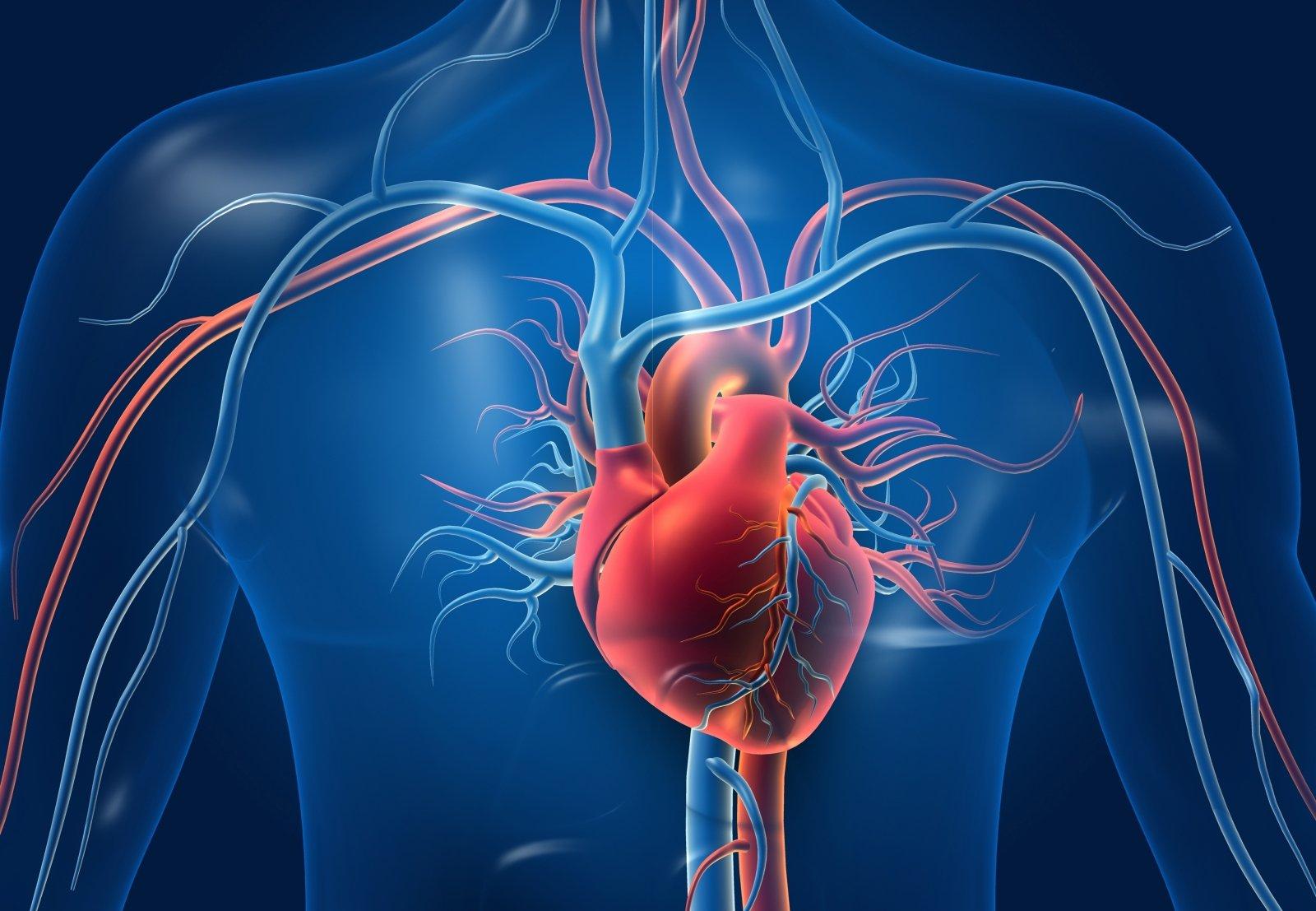 10 geriausių širdies sveikatos patarimų